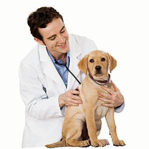 dyrlæge